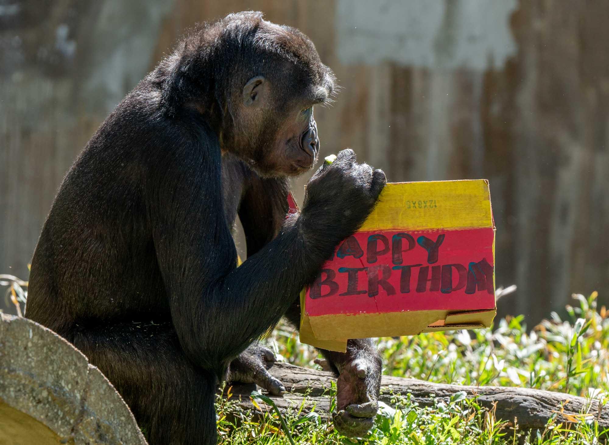 Happy birthday, Moke!